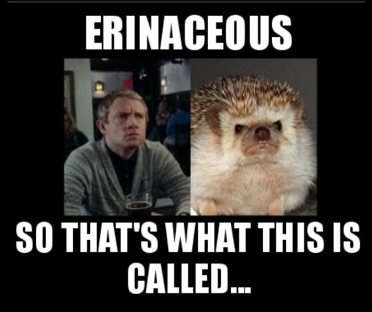 Martin Freeman and Hedgehog